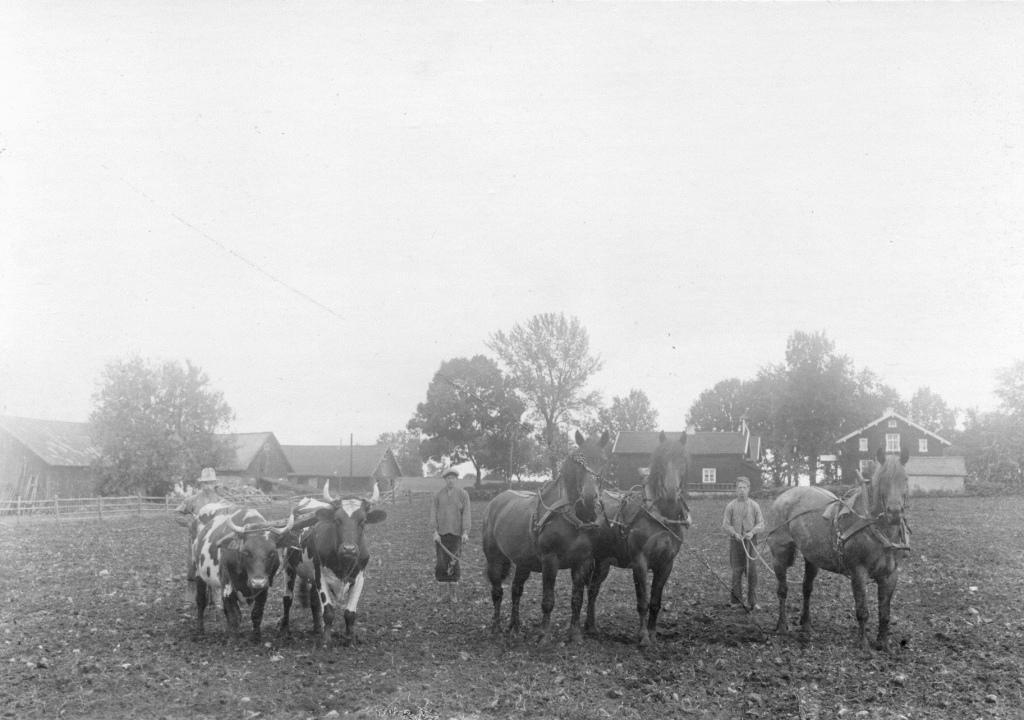 Hästar på Ågården, Södra Säm
